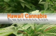 Hawaii Cannabis Awareness Expo