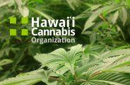 Hawaii Cannabis