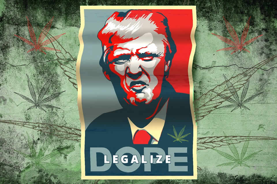 Trump backs states rights to legalize Cannabis